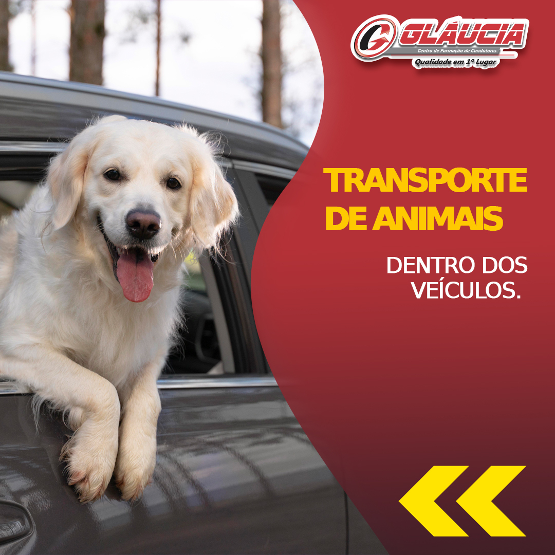 Transporte de animais dentro dos veículos.